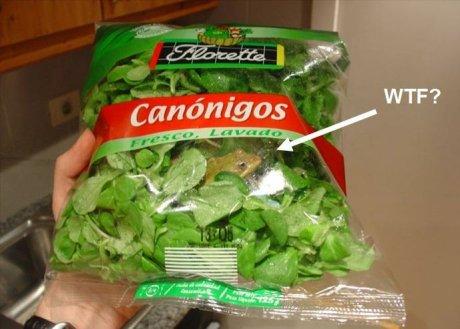 broasca din salata